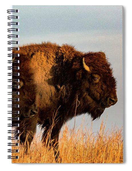 Bison Pair Spiral Notebook