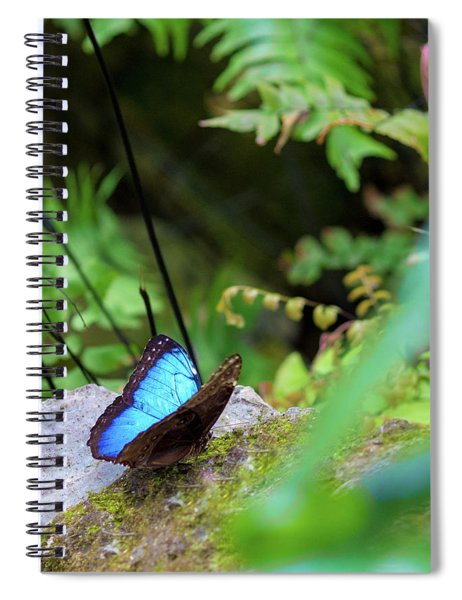 Black And Blue Butterfly Spiral Notebook