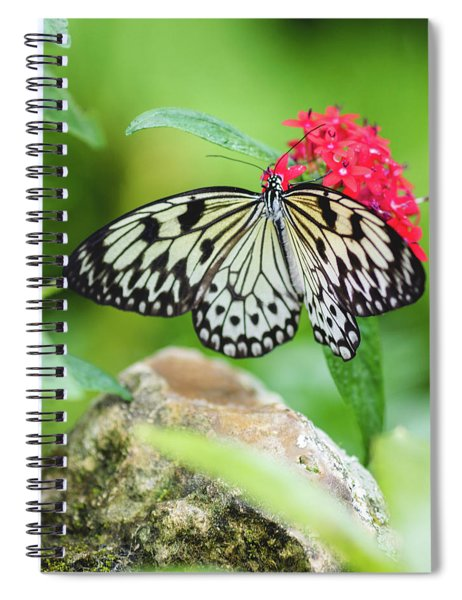 Black And White Butterfly Spiral Notebook