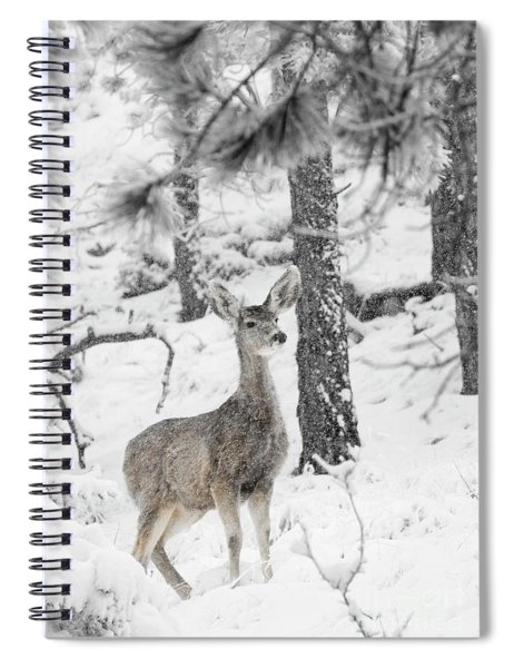 Black And White Mule Deer In Heavy Snowfall Spiral Notebook