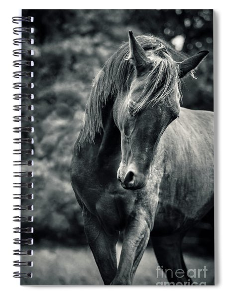 Black And White Portrait Of Horse Spiral Notebook