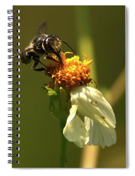 Black And Yellow Bee Pollinating Spiral Notebook