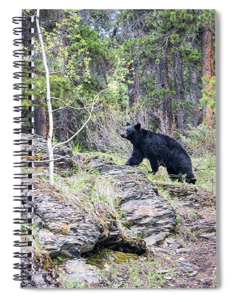 Black Bear At Johnston Canyon Spiral Notebook