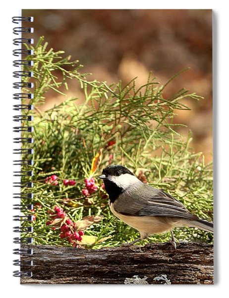 Black-capped Chickadee In Winter Spiral Notebook