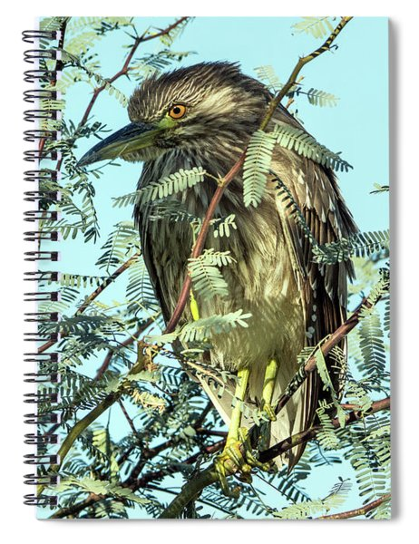 Black-crowned Night Heron 0063-111017-1cr Spiral Notebook