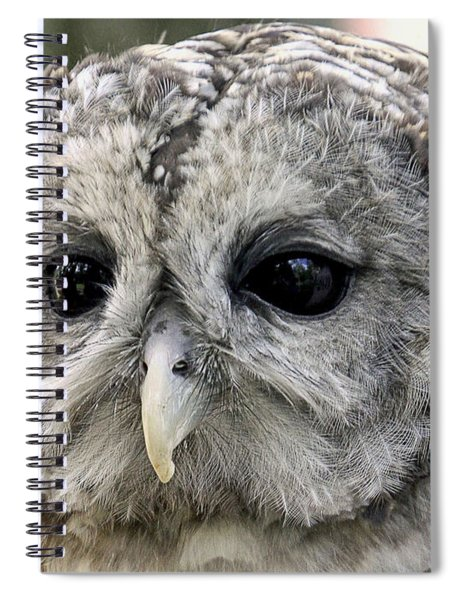 Black Eye Owl Spiral Notebook