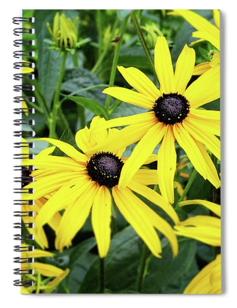 Black Eyed Susans- Fine Art Photograph By Linda Woods Spiral Notebook