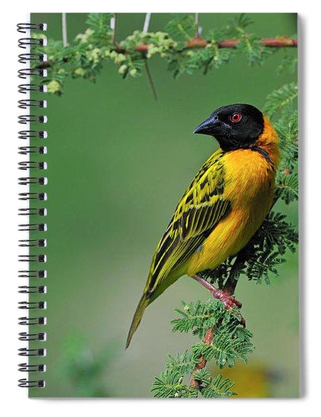 Black-headed Weaver Spiral Notebook