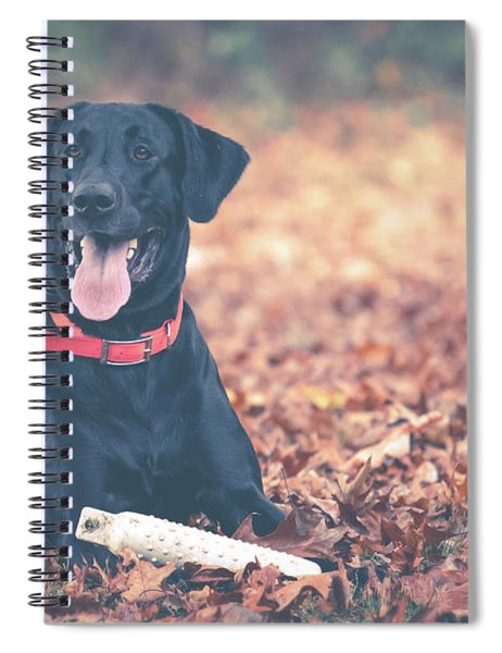 Black Labrador In The Fall Leaves Spiral Notebook
