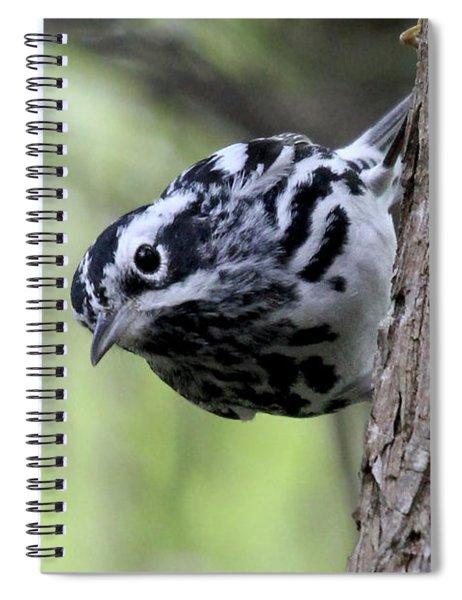 Black-n-white Warbler Spiral Notebook