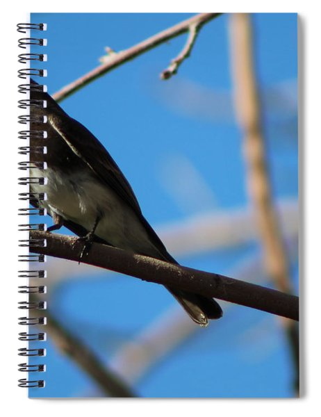 Black Phoebe Perched Spiral Notebook