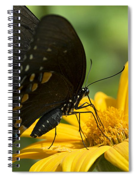 Black Swallowtail Drinking Spiral Notebook