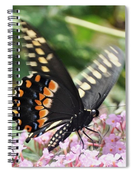 Black Swallowtail Butterfly On Pink Spiral Notebook
