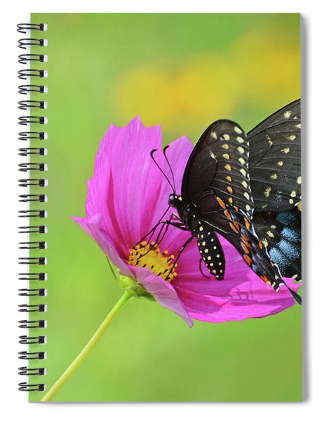 Black Swallowtail On A Cosmos Spiral Notebook