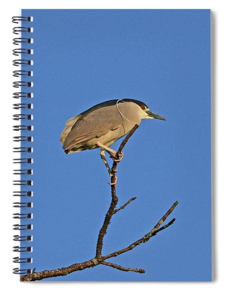 Black-crowned Night Heron Spiral Notebook