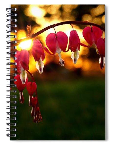 Bleeding Heart Sunset Spiral Notebook
