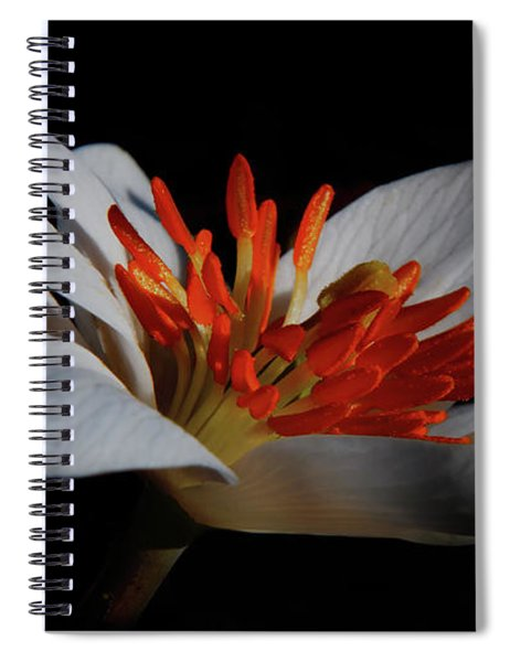 Spiral Notebook featuring the photograph Bloodroot Art by Patti Deters