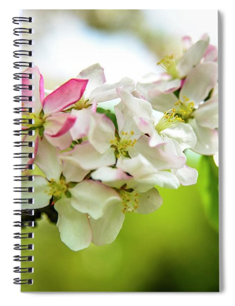 Blooming -apples Blossoms  Spiral Notebook