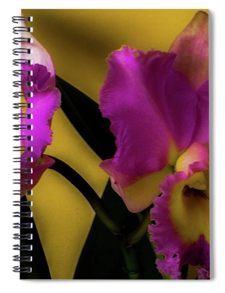 Blooming Cattleya Orchids Spiral Notebook