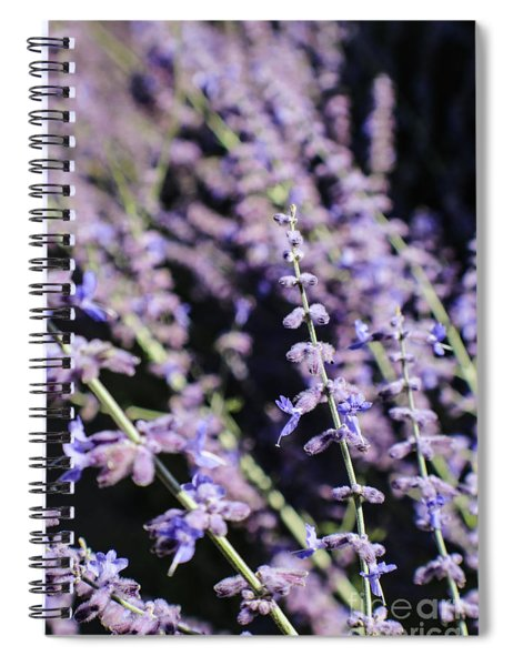 Blooming Lavender  Spiral Notebook