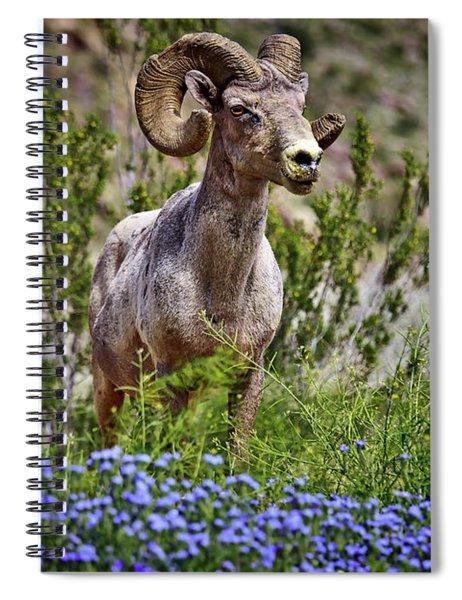 Blooms And Bighorn In Anza Borrego Desert State Park  Spiral Notebook