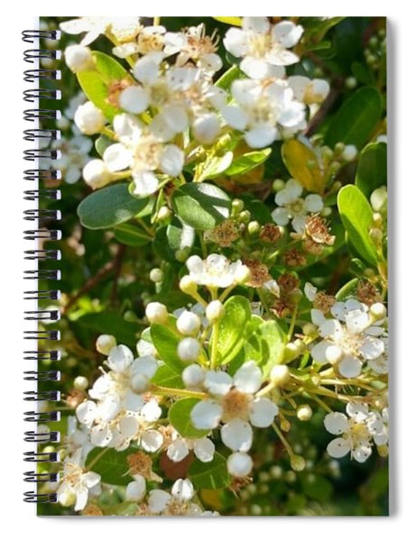 White Blooms Of  Nature Spiral Notebook