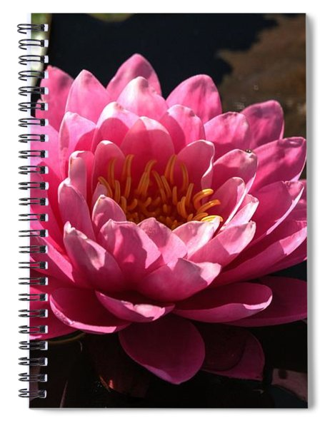 Blossoms And Lily Pads 4 Spiral Notebook