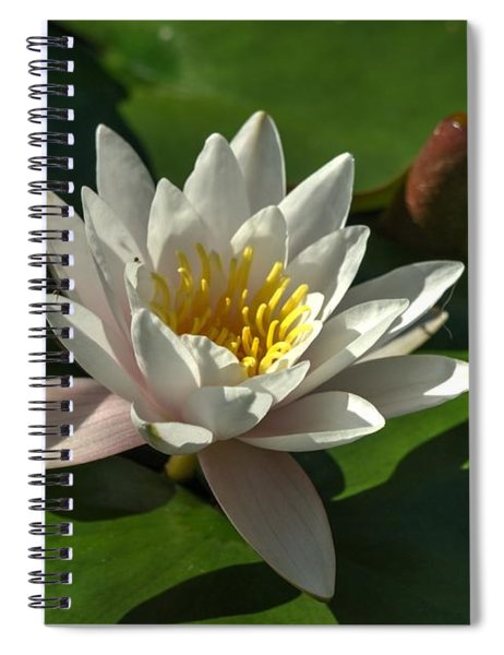 Blossoms And Lily Pads 8 Spiral Notebook