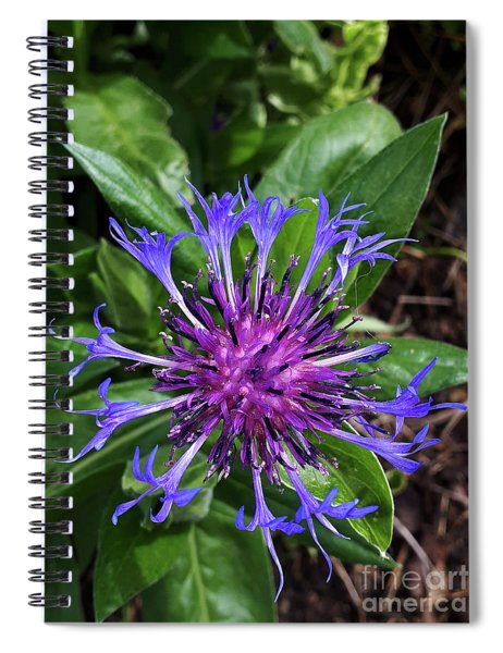 Blue As A Cornflower In The Meadow Spiral Notebook