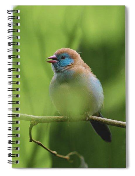 Blue Bird Chirping Spiral Notebook