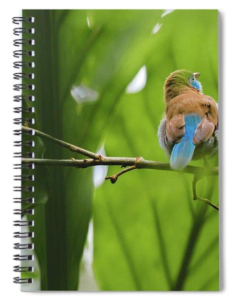 Blue Bird Has An Itch Spiral Notebook