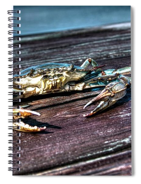 Blue Crab - Above View Spiral Notebook