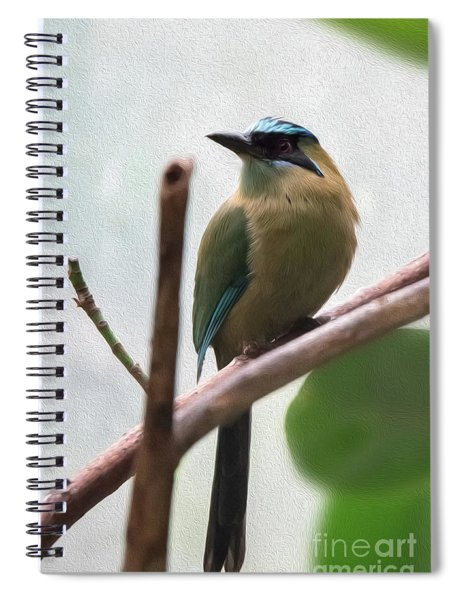 Blue-crowned Motmot Oil Spiral Notebook