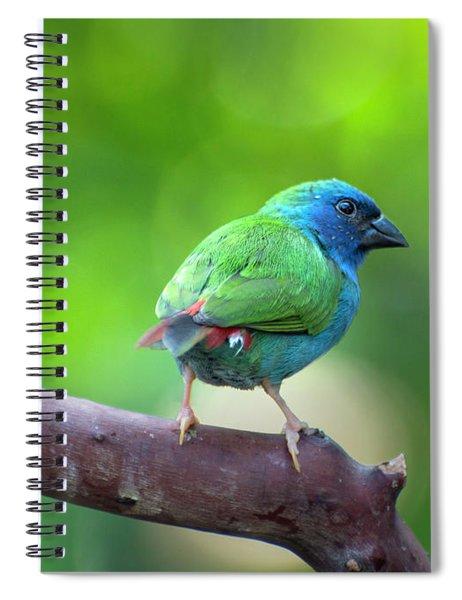 Blue-faced Parrotfinch Spiral Notebook
