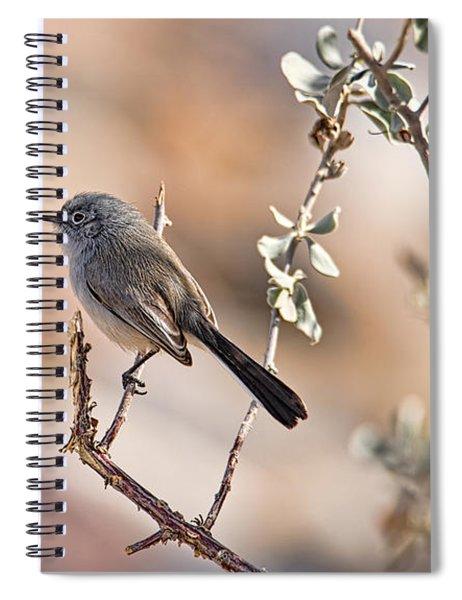 Black-tailed Gnatcatcher Spiral Notebook