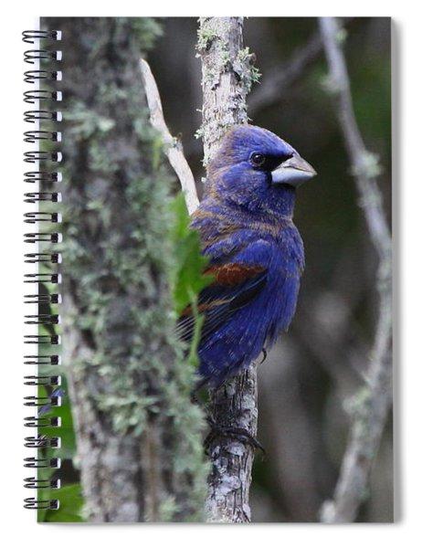 Blue Grosbeak In A Mangrove Spiral Notebook