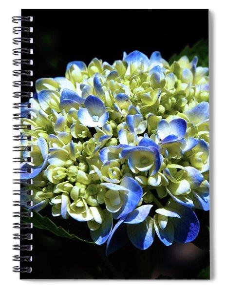 Blue Hydrangea Onstage 2620 H_2 Spiral Notebook