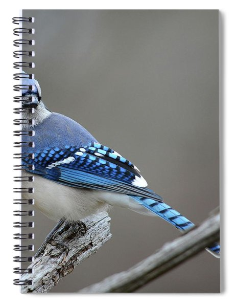 Blue Jay 2 Spiral Notebook
