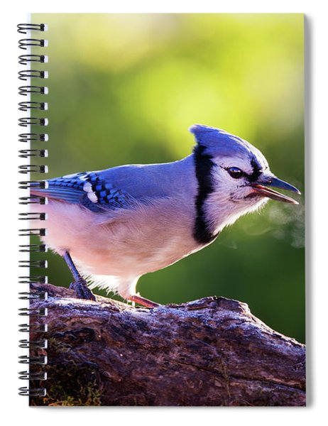 Blue Jay Breath Spiral Notebook