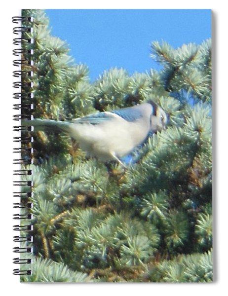 Blue Jay Colorado Spruce Spiral Notebook