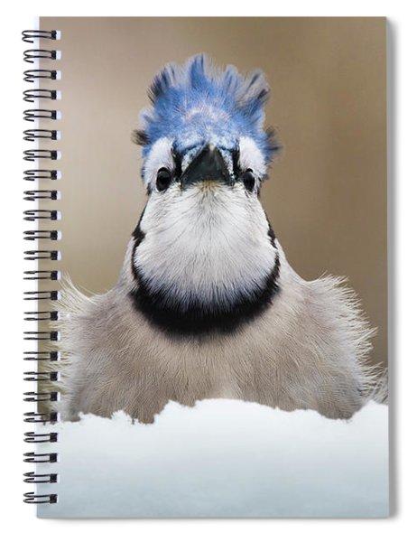 Blue Jay In Snow Spiral Notebook