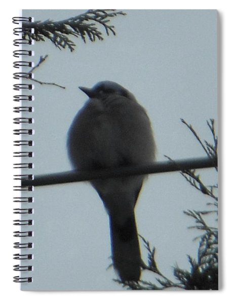 Blue Jay On Wire Spiral Notebook
