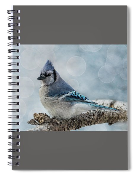 Spiral Notebook featuring the photograph Blue Jay Perch by Patti Deters