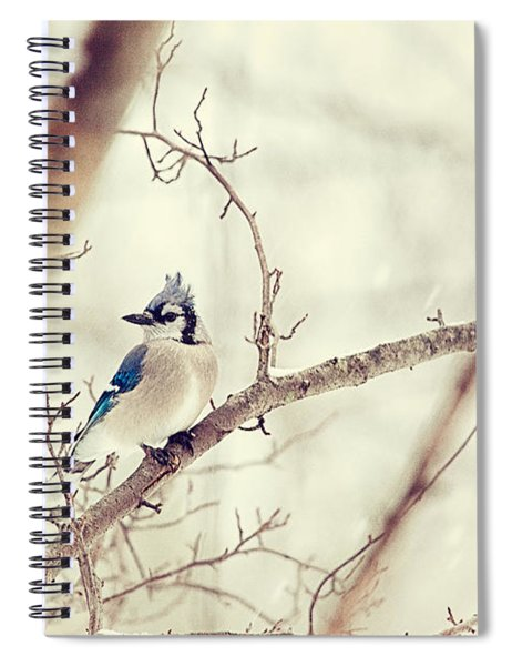 Blue Jay Winter Spiral Notebook