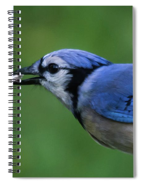 Blue Jay With Seed Spiral Notebook