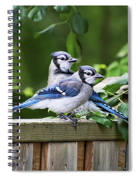 Blue Jays Looking For Trouble Spiral Notebook