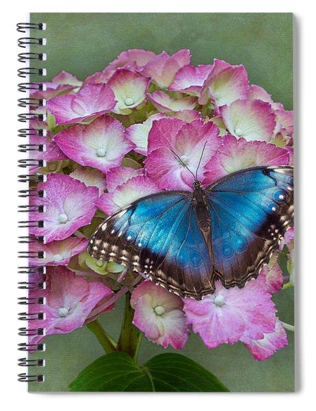 Spiral Notebook featuring the photograph Blue Morpho Butterfly On Pink Hydrangea by Patti Deters