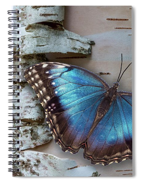 Spiral Notebook featuring the photograph Blue Morpho Butterfly On White Birch Bark by Patti Deters