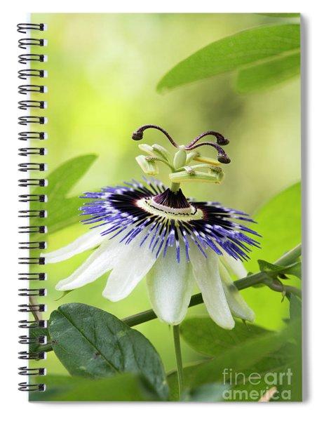 Blue Passion Flower Spiral Notebook