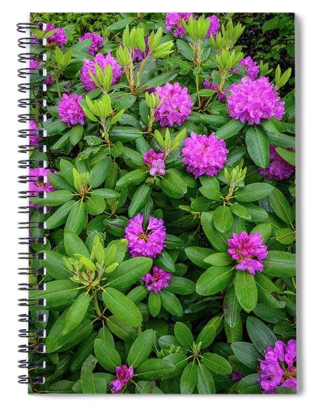 Blue Ridge Mountains Rhododendron Blooming Spiral Notebook